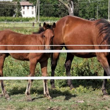 I cavalli degli allevamenti Toniatti